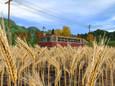 la*uta - the Harvest(2)